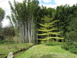 Bambusskov